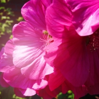 ma's flowers_2