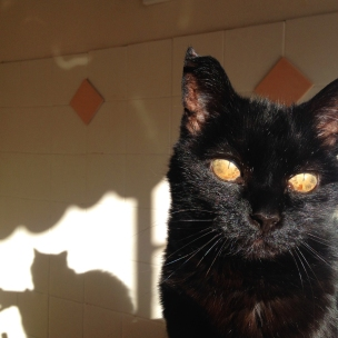 sooty_07.09.14
